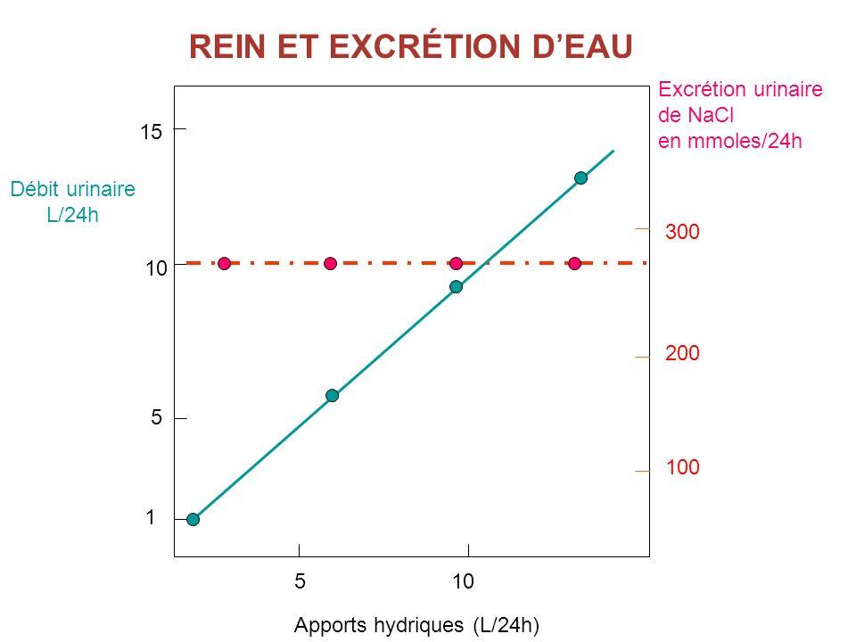 REIN ET EXCRÉTION D'EAU