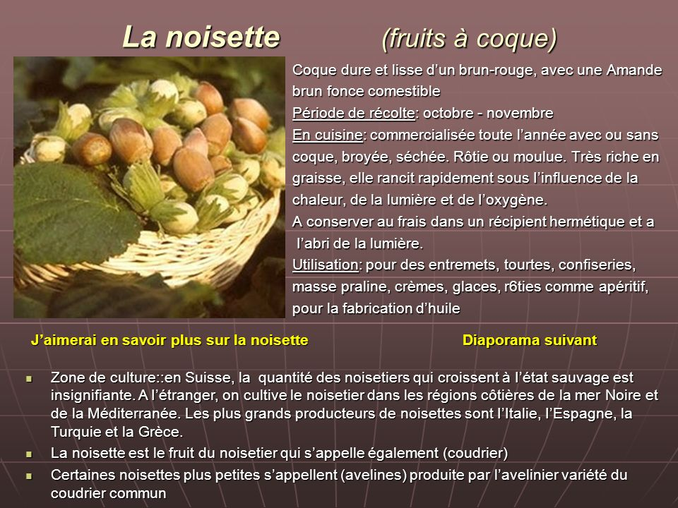 La noisette (fruits à coque)