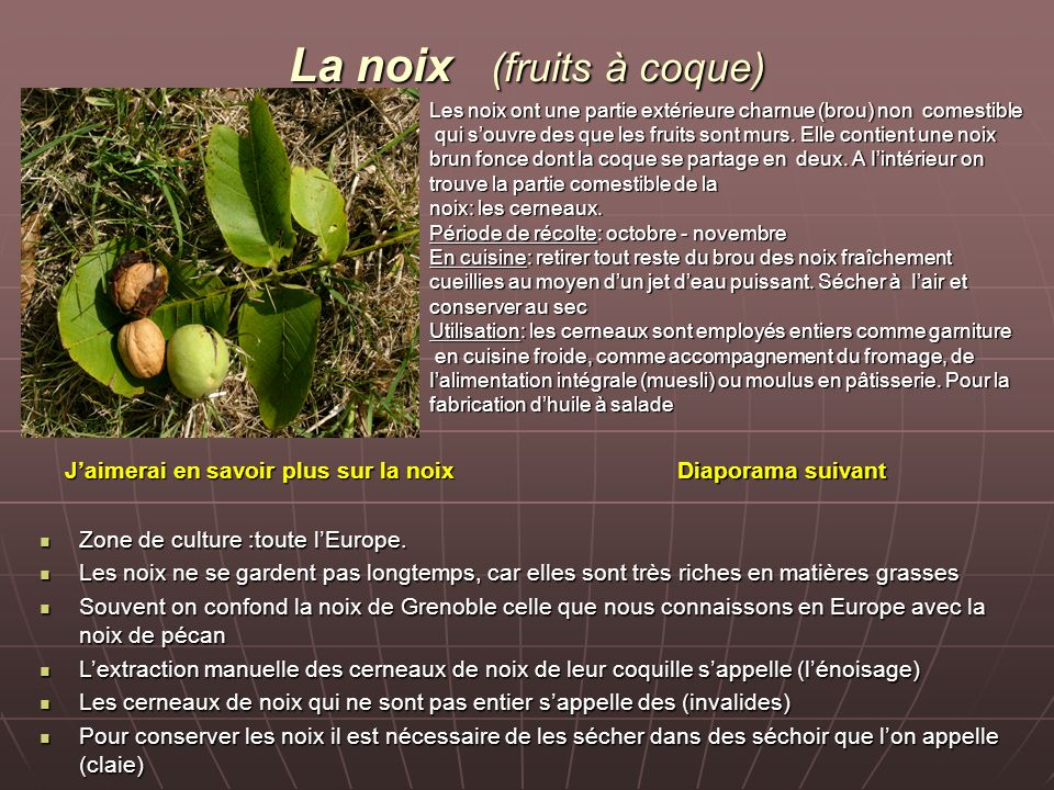 La noix (fruits à coque)