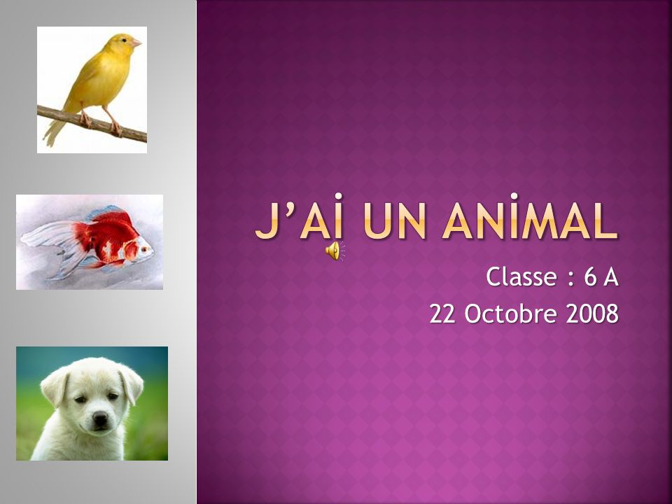 J'Aİ UN ANİMAL Classe : 6 A 22 Octobre 2008