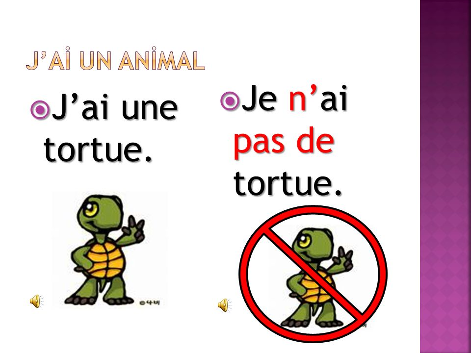 J'Aİ UN ANİMAL Je n'ai pas de tortue. J'ai une tortue.