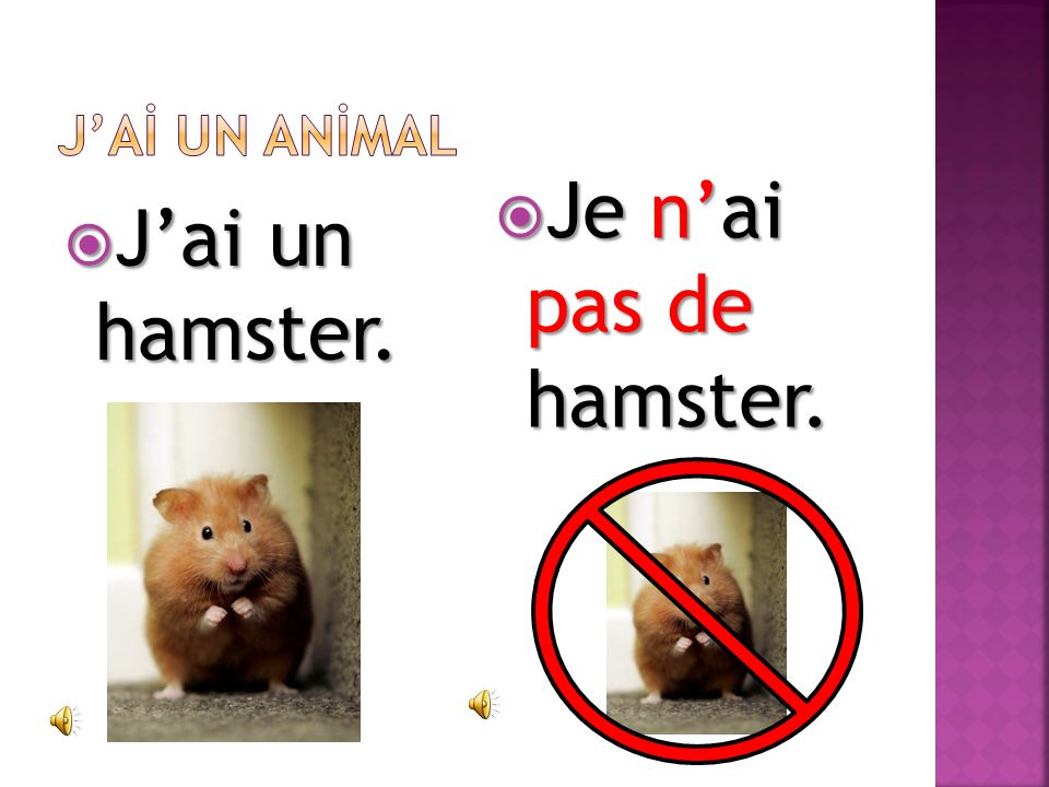 J'Aİ UN ANİMAL Je n'ai pas de hamster. J'ai un hamster.