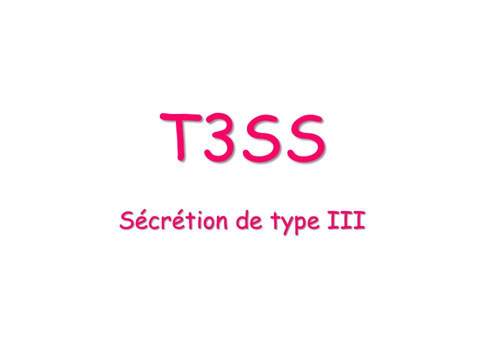 T3SS Sécrétion de type III