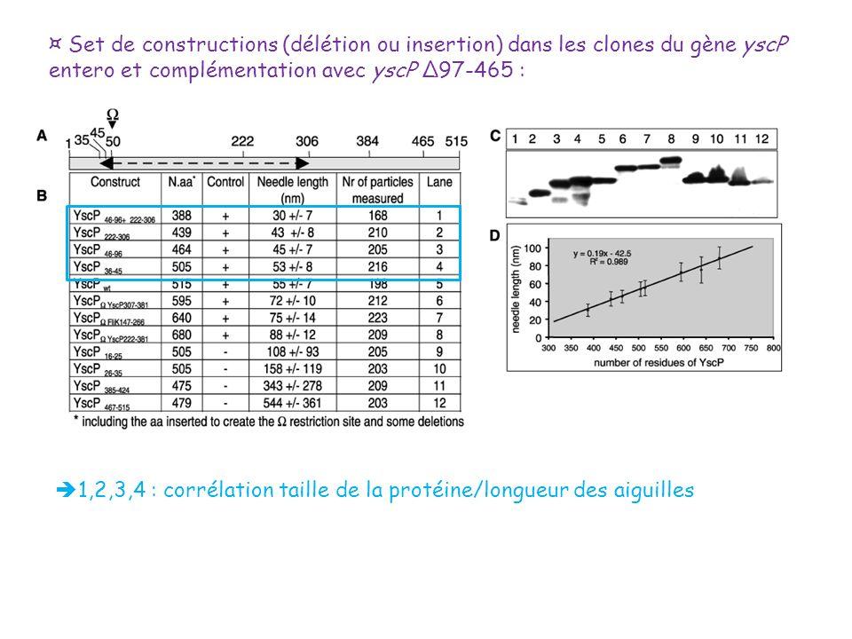 ¤ Set de constructions (délétion ou insertion) dans les clones du gène yscP entero et complémentation avec yscP Δ97-465 :
