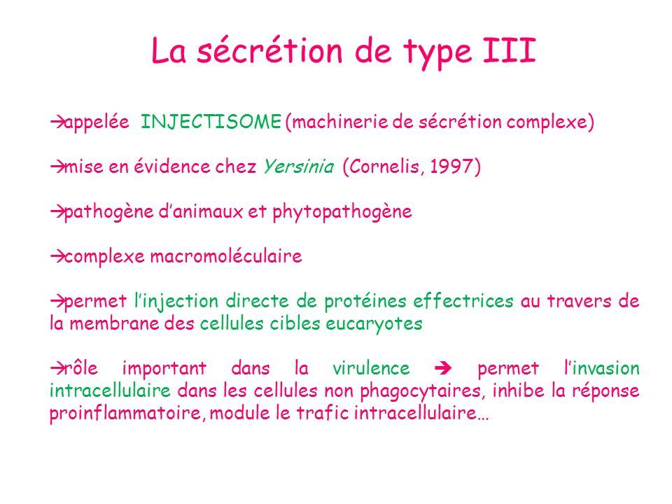 La sécrétion de type III
