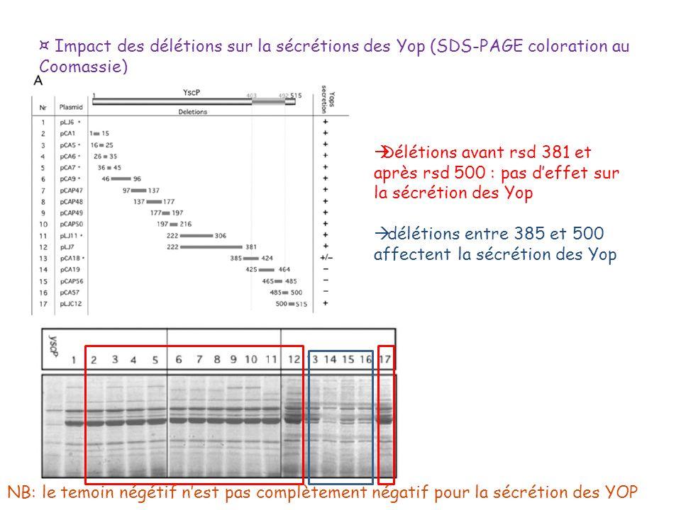 ¤ Impact des délétions sur la sécrétions des Yop (SDS-PAGE coloration au Coomassie)