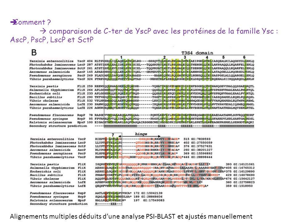 Comment  comparaison de C-ter de YscP avec les protéines de la famille Ysc : AscP, PscP, LscP et SctP.