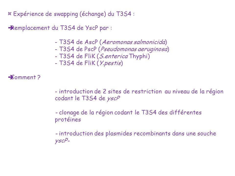 ¤ Expérience de swapping (échange) du T3S4 :