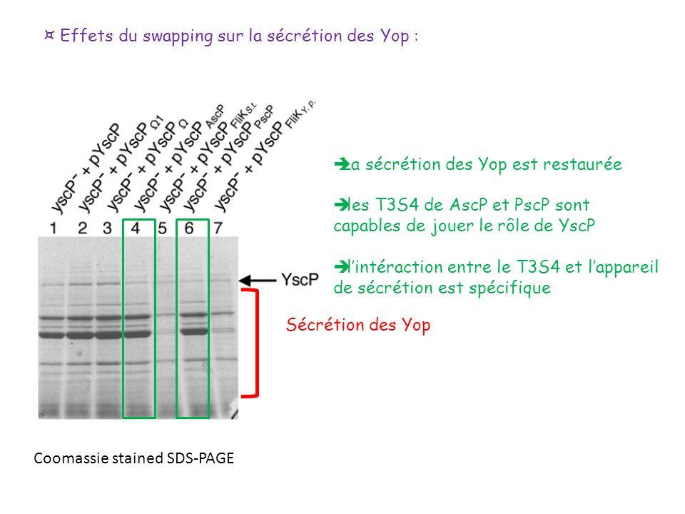 ¤ Effets du swapping sur la sécrétion des Yop :