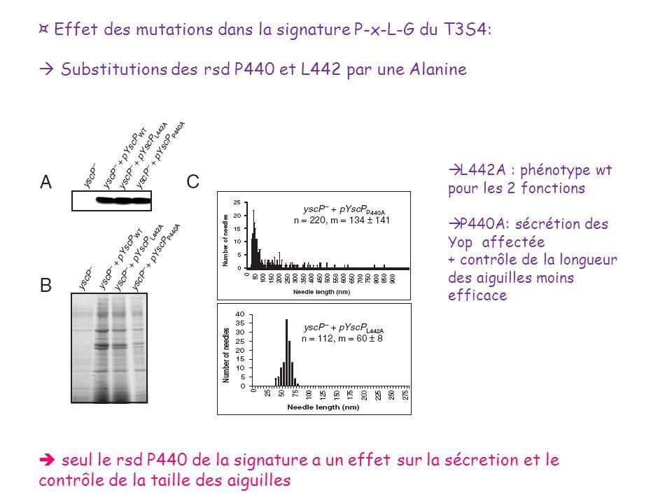 ¤ Effet des mutations dans la signature P-x-L-G du T3S4:
