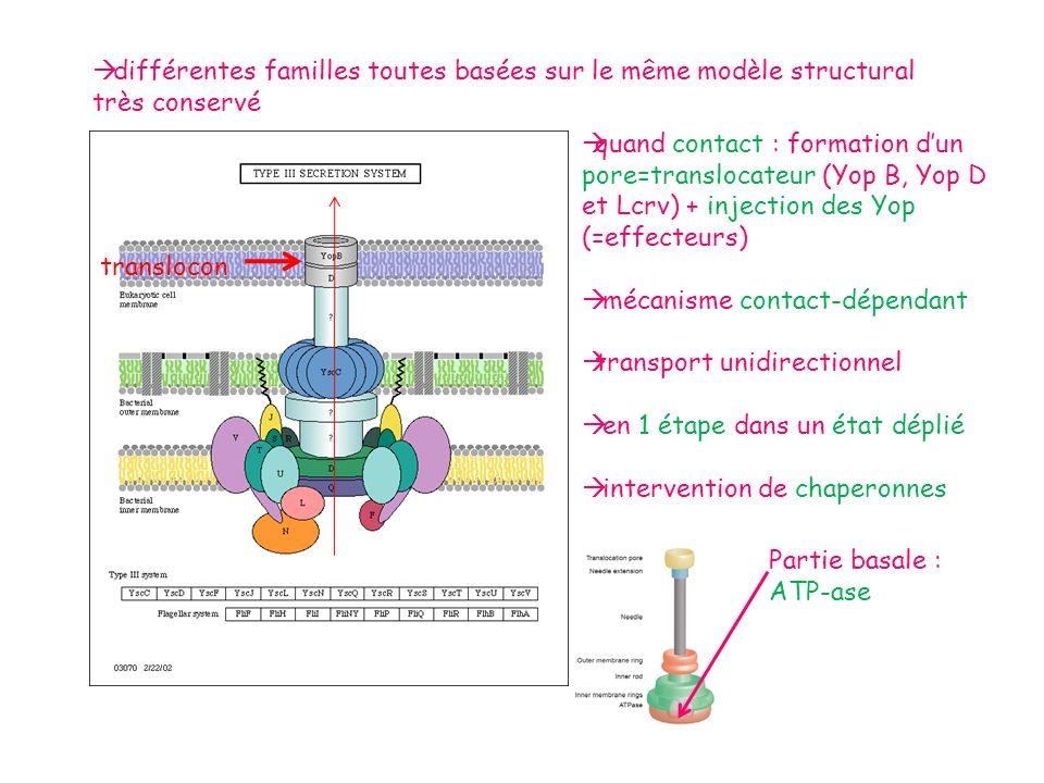 différentes familles toutes basées sur le même modèle structural très conservé