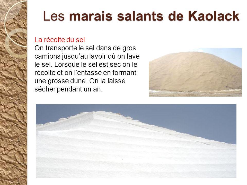 Les marais salants de Kaolack