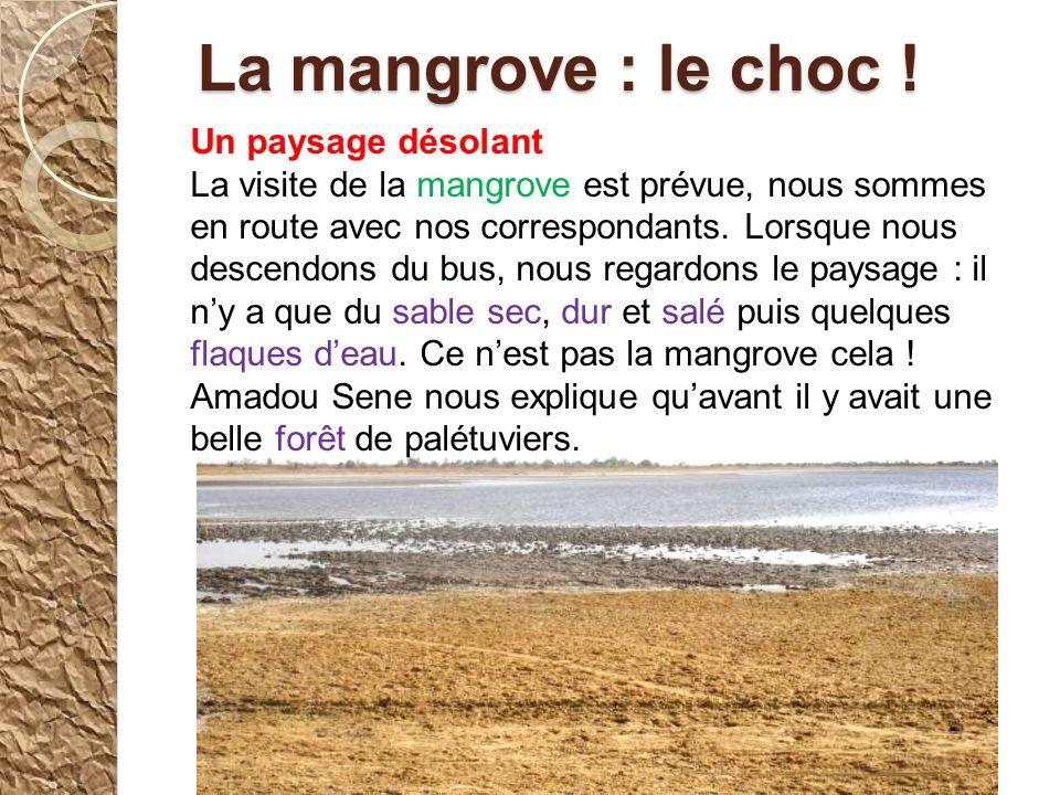 La mangrove : le choc ! Un paysage désolant