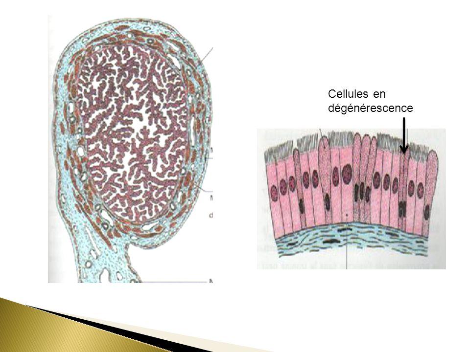 Cellules en dégénérescence