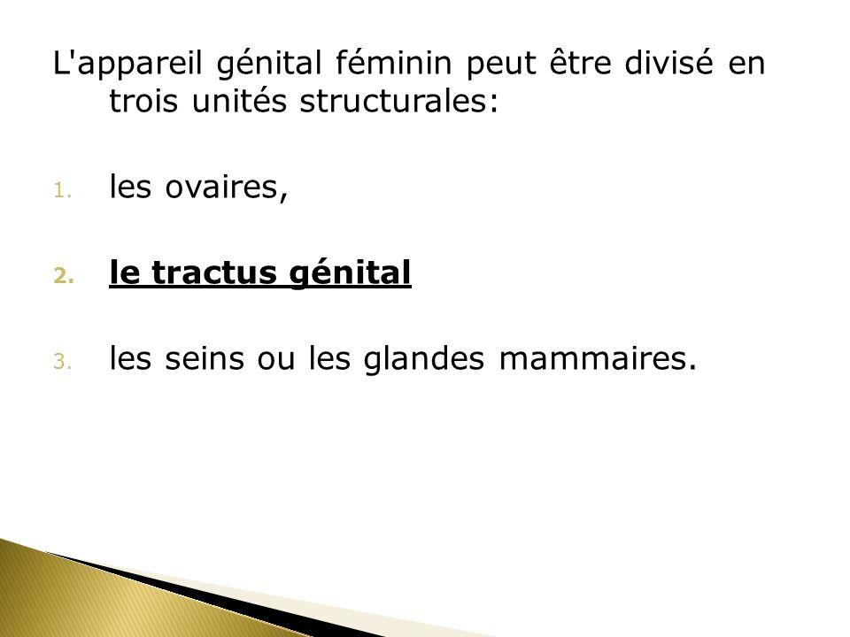 L appareil génital féminin peut être divisé en trois unités structurales: