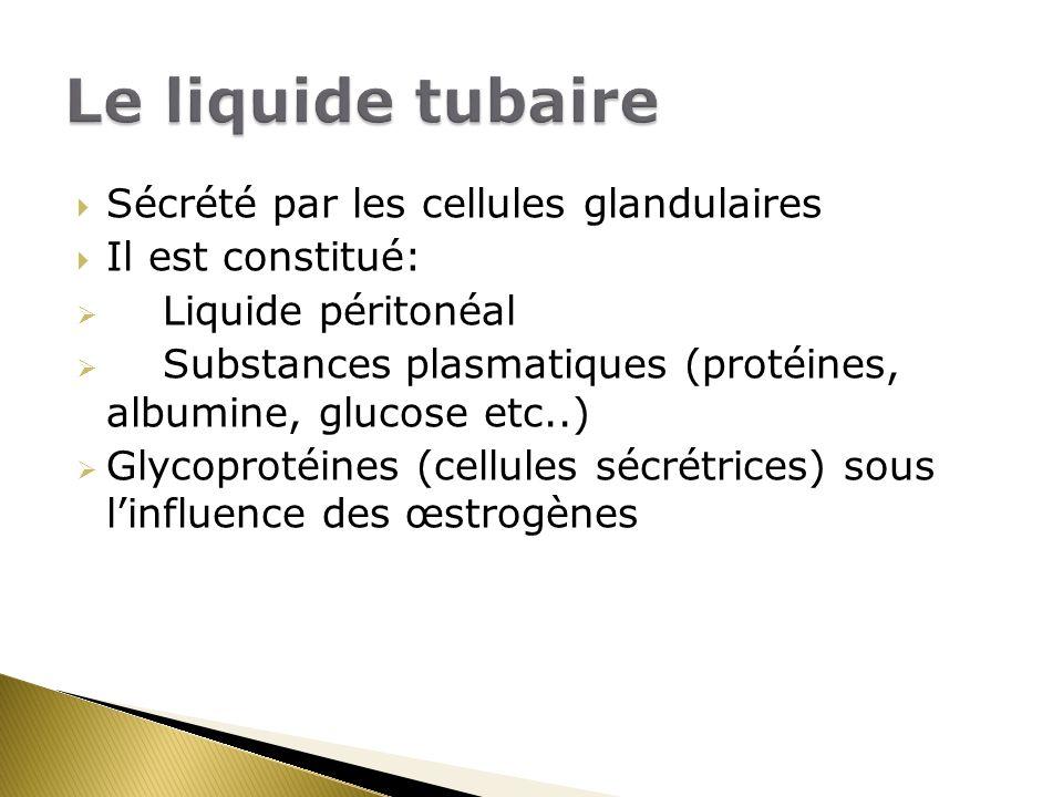 Le liquide tubaire Sécrété par les cellules glandulaires