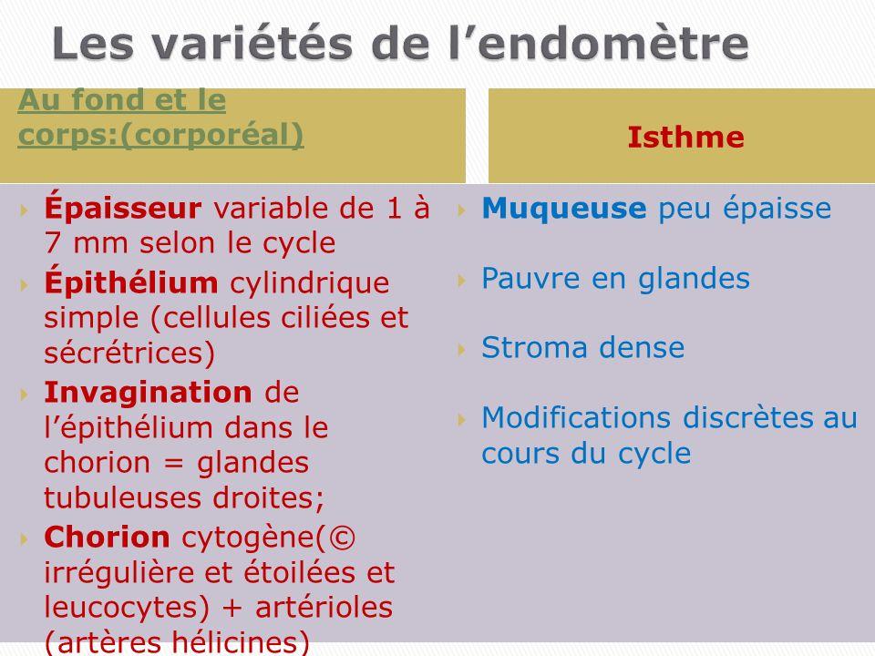 Les variétés de l'endomètre