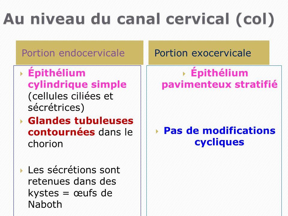 Au niveau du canal cervical (col)