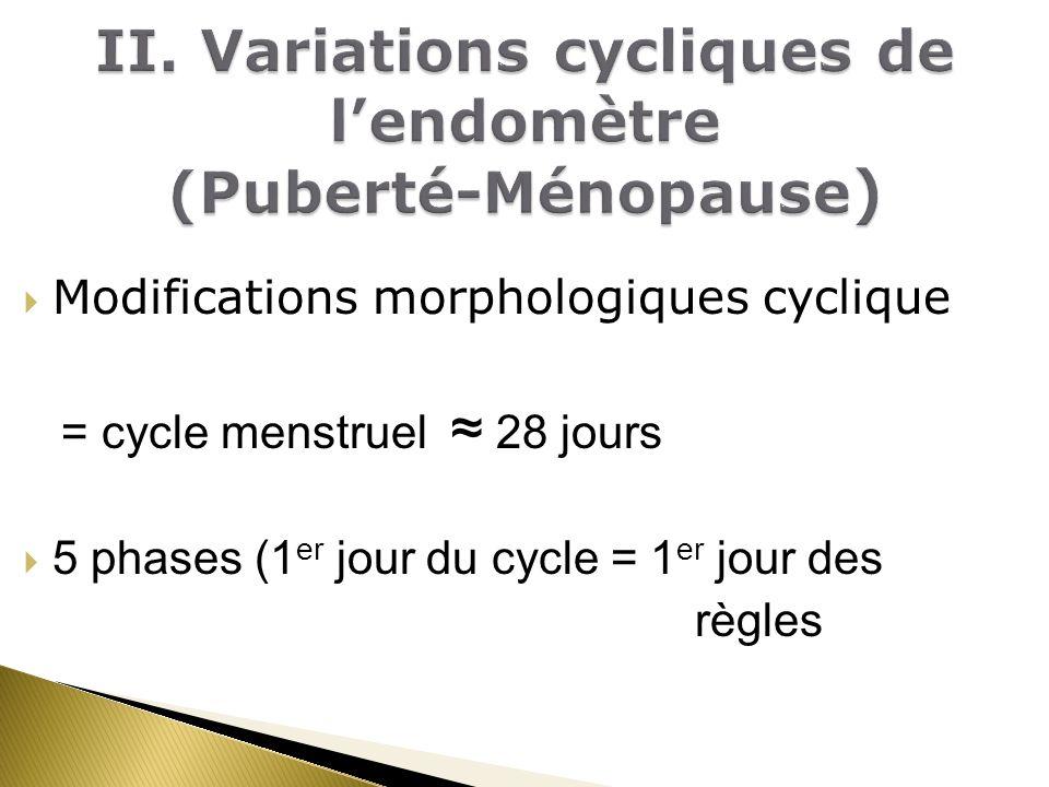II. Variations cycliques de l'endomètre (Puberté-Ménopause)