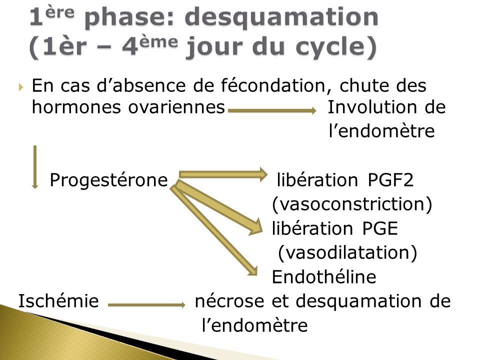 1ère phase: desquamation (1èr – 4ème jour du cycle)