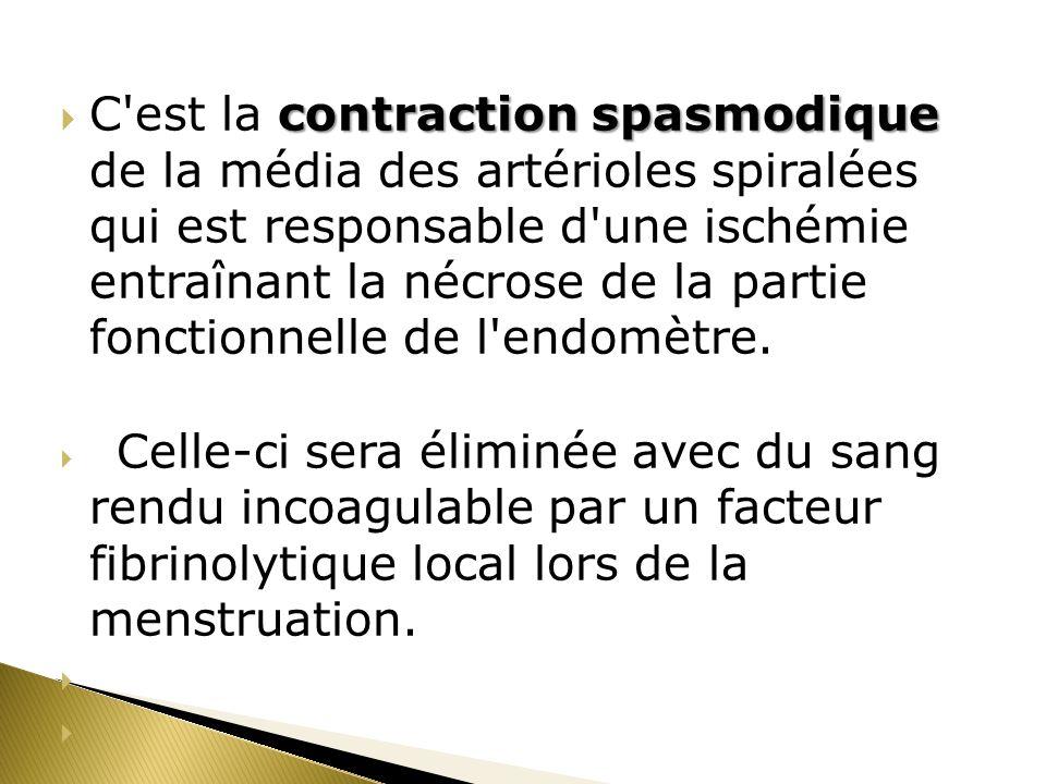 C est la contraction spasmodique de la média des artérioles spiralées qui est responsable d une ischémie entraînant la nécrose de la partie fonctionnelle de l endomètre.