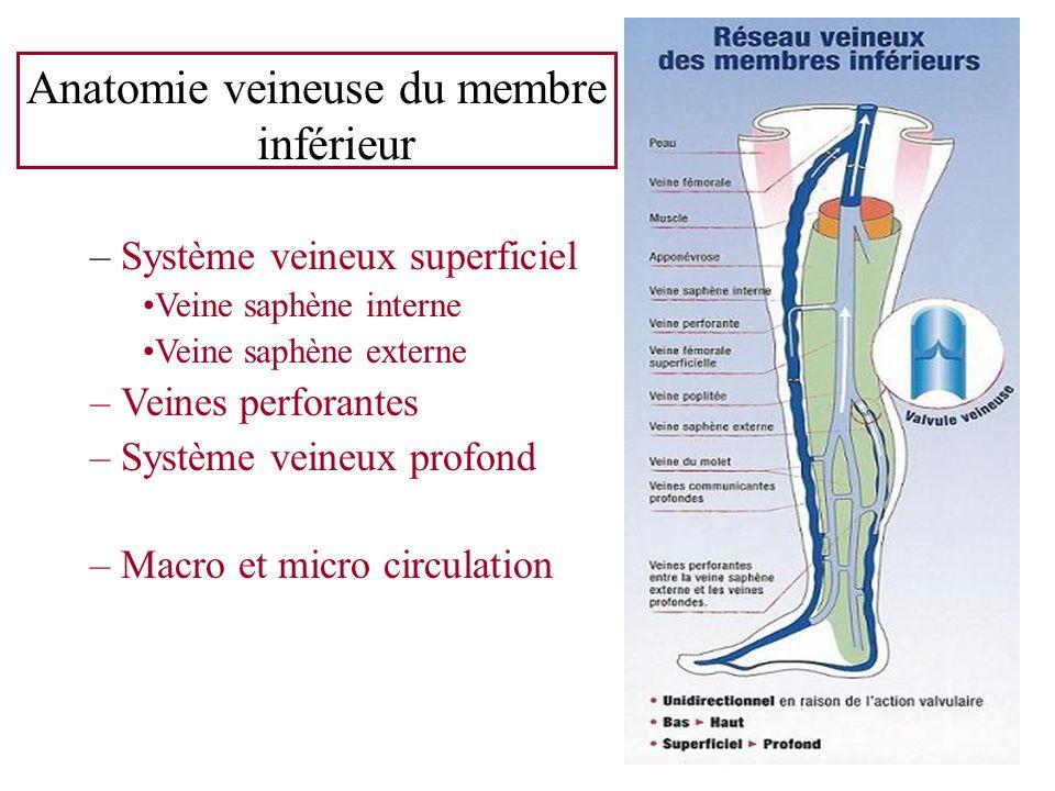 Anatomie veineuse du membre inférieur