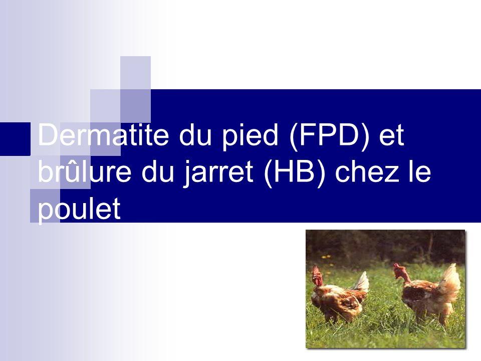 Dermatite du pied (FPD) et brûlure du jarret (HB) chez le poulet