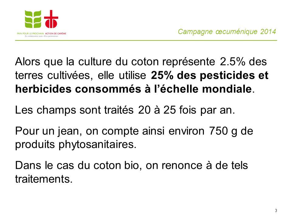 Alors que la culture du coton représente 2