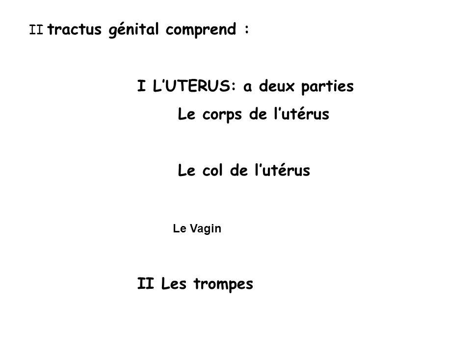 I L'UTERUS: a deux parties Le corps de l'utérus