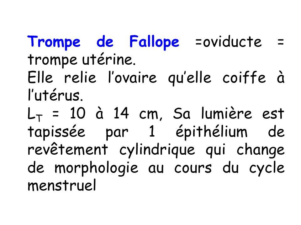 Trompe de Fallope =oviducte = trompe utérine.