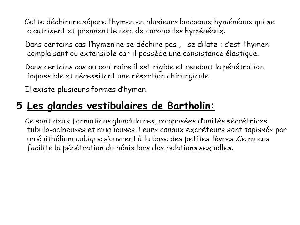 Les glandes vestibulaires de Bartholin: