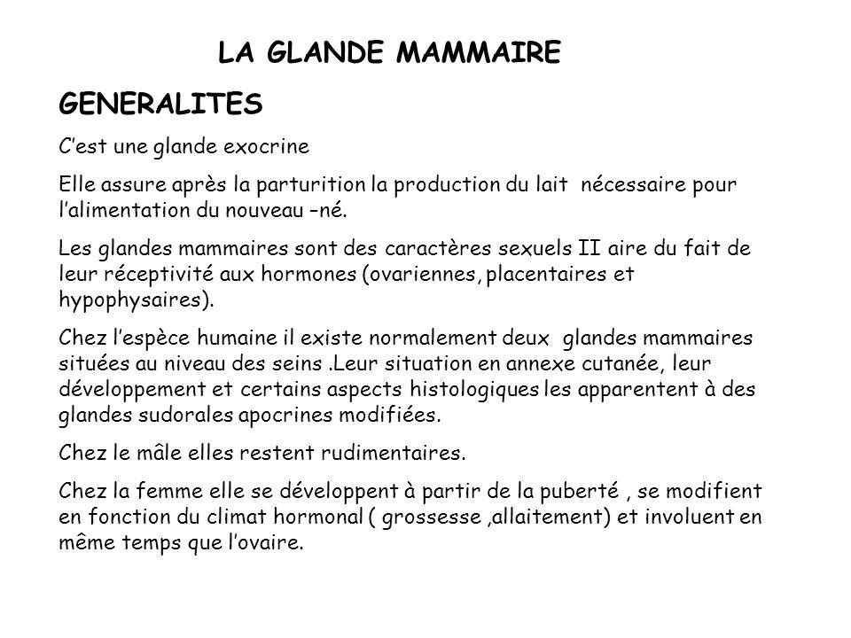 LA GLANDE MAMMAIRE GENERALITES C'est une glande exocrine