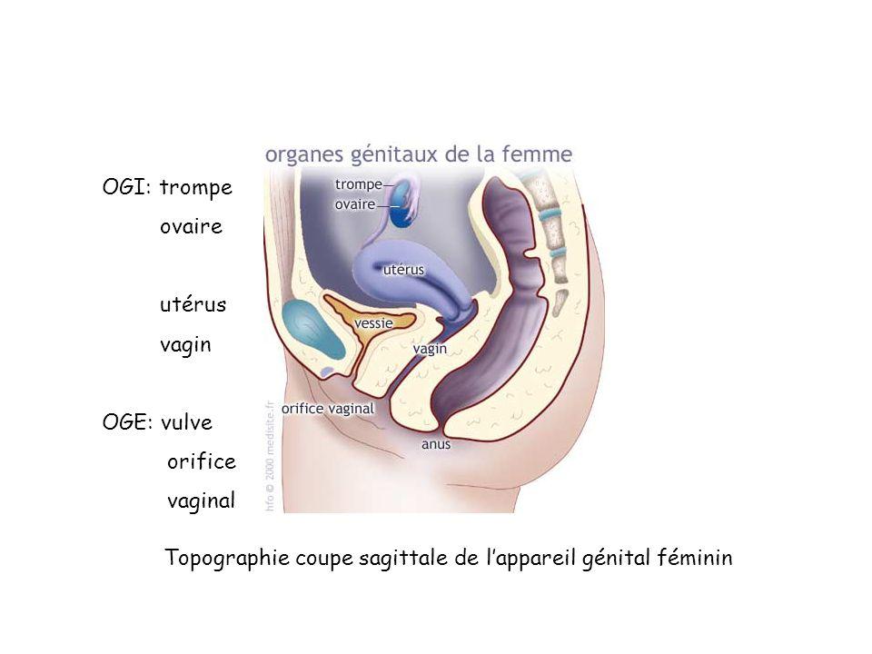 OGI: trompe ovaire. utérus. vagin. OGE: vulve.