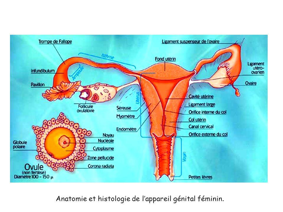 Anatomie et histologie de l'appareil génital féminin.
