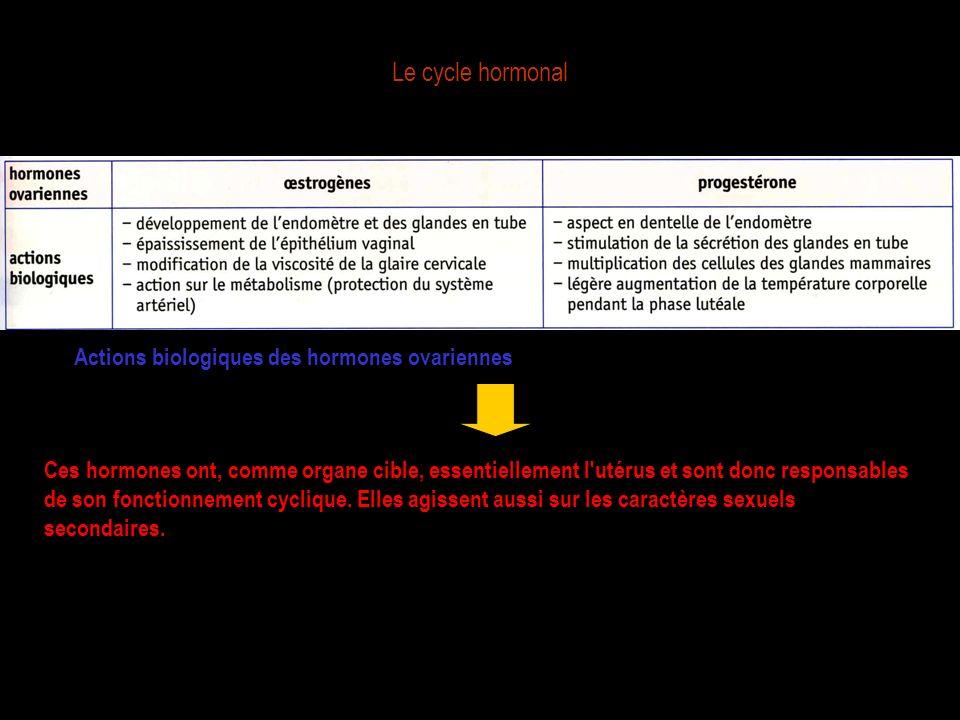 Le cycle hormonal Actions biologiques des hormones ovariennes