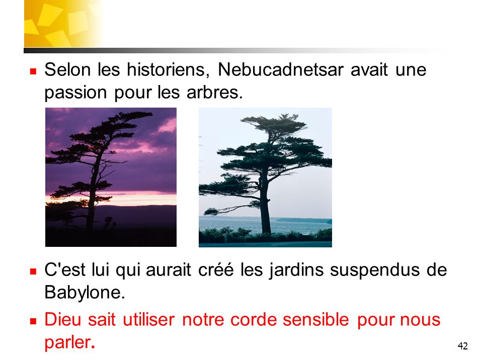 Selon les historiens, Nebucadnetsar avait une passion pour les arbres.
