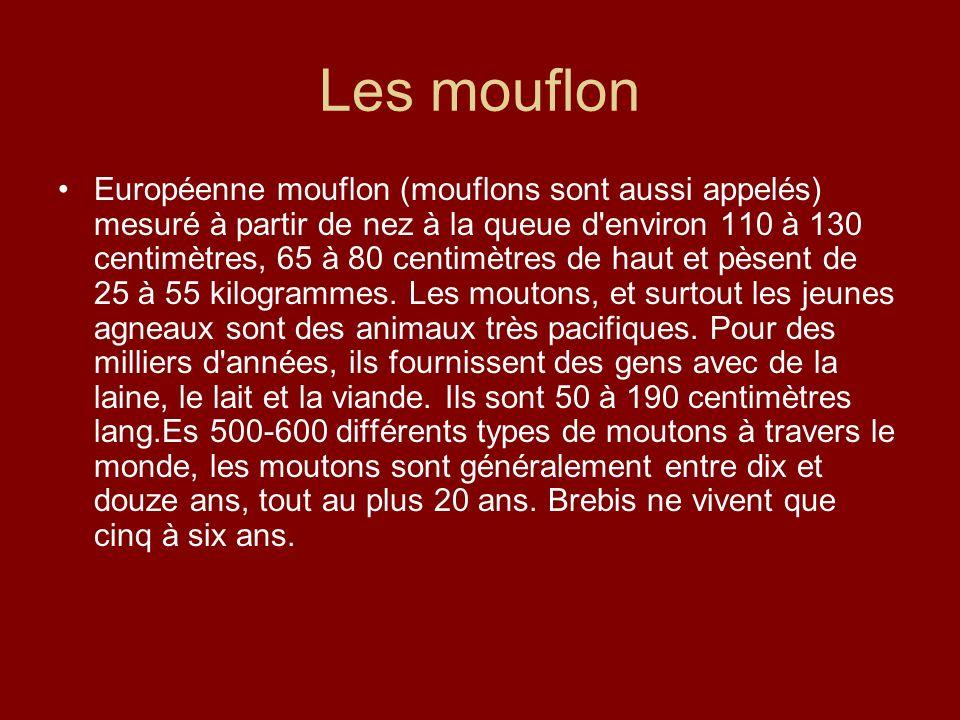 Les mouflon
