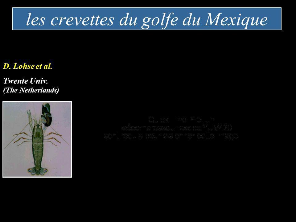 les crevettes du golfe du Mexique