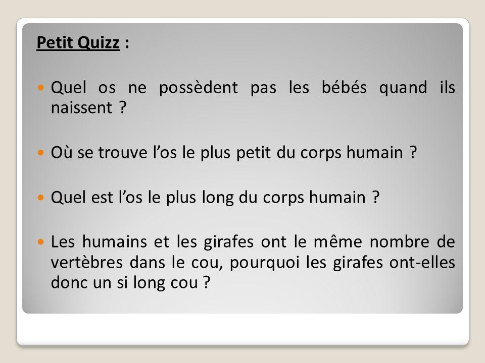 Petit Quizz : Quel os ne possèdent pas les bébés quand ils naissent Où se trouve l'os le plus petit du corps humain