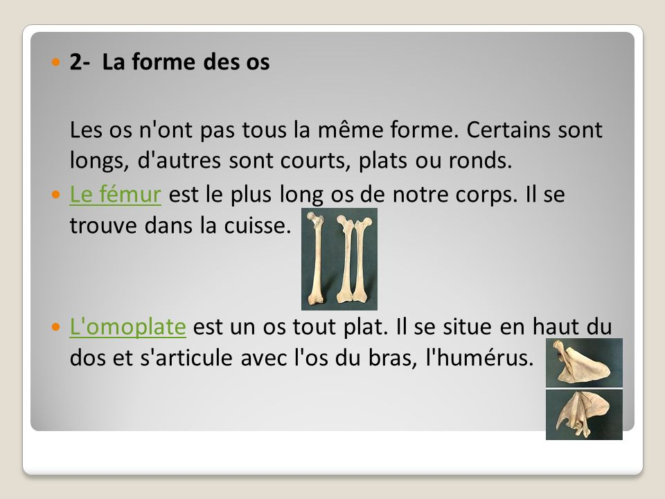 2- La forme des os Les os n ont pas tous la même forme. Certains sont longs, d autres sont courts, plats ou ronds.