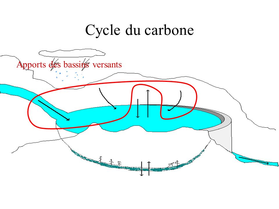 Cycle du carbone Apports des bassins versants Image cycle carbone