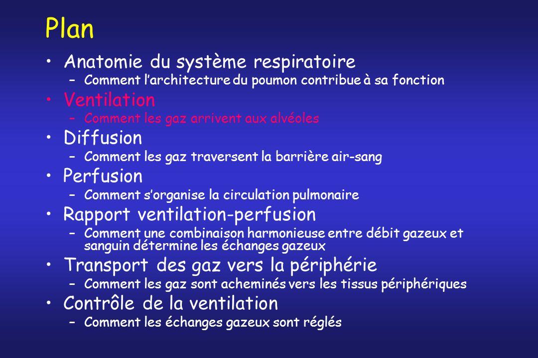 Plan Anatomie du système respiratoire Ventilation Diffusion Perfusion