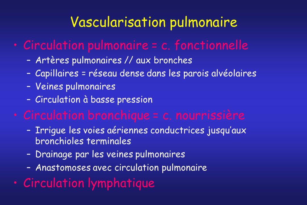 Vascularisation pulmonaire