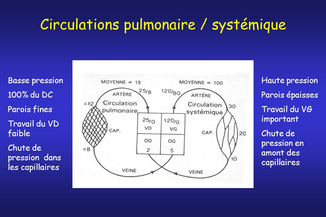 Circulations pulmonaire / systémique