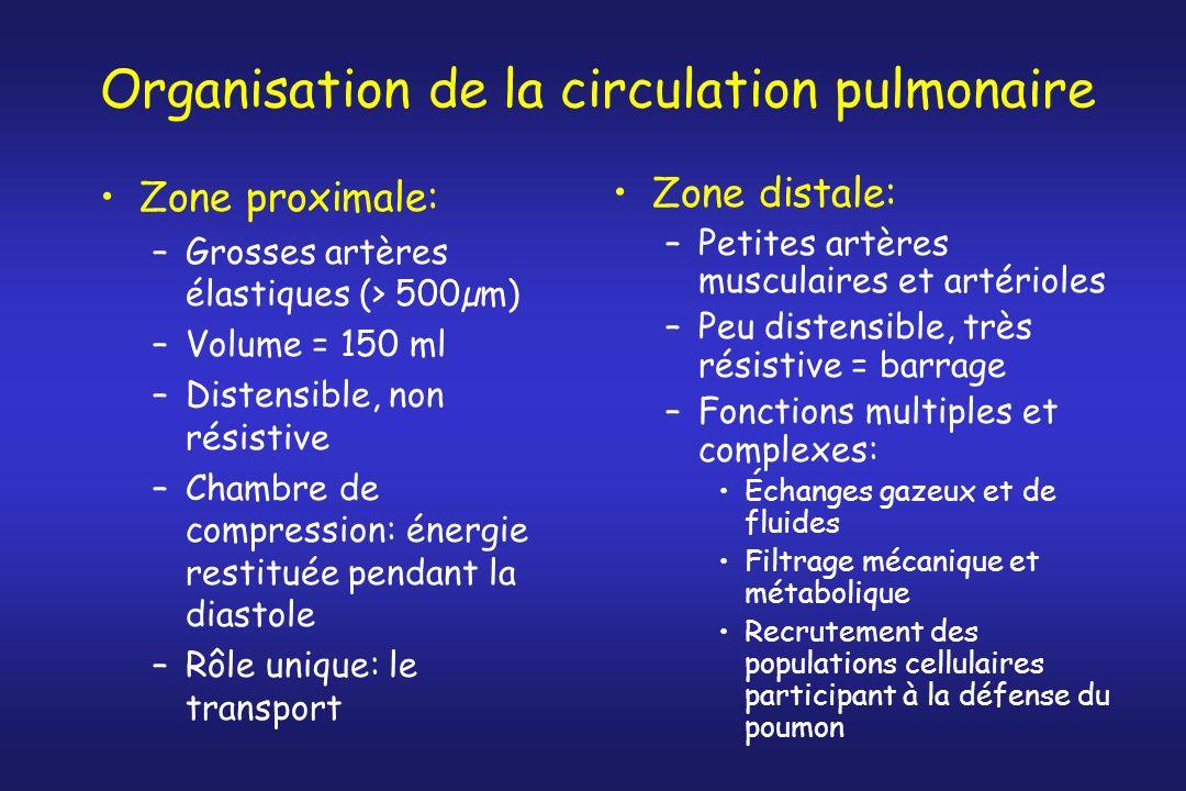 Organisation de la circulation pulmonaire