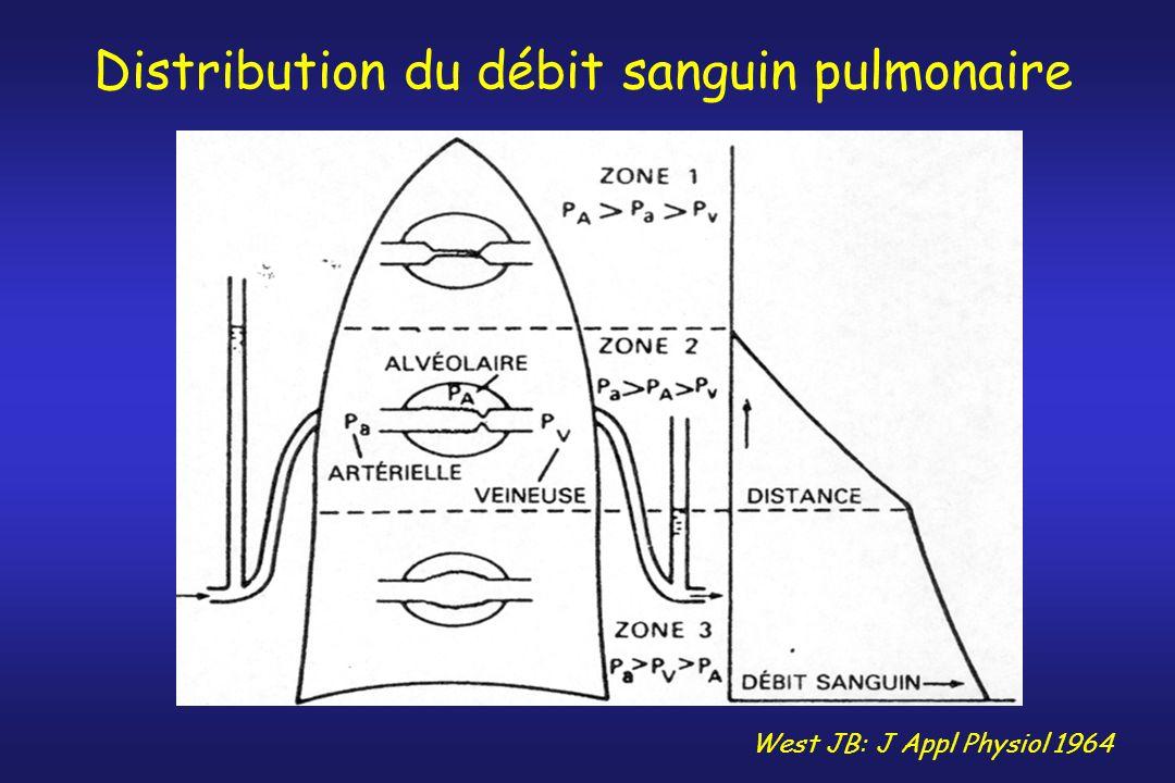 Distribution du débit sanguin pulmonaire