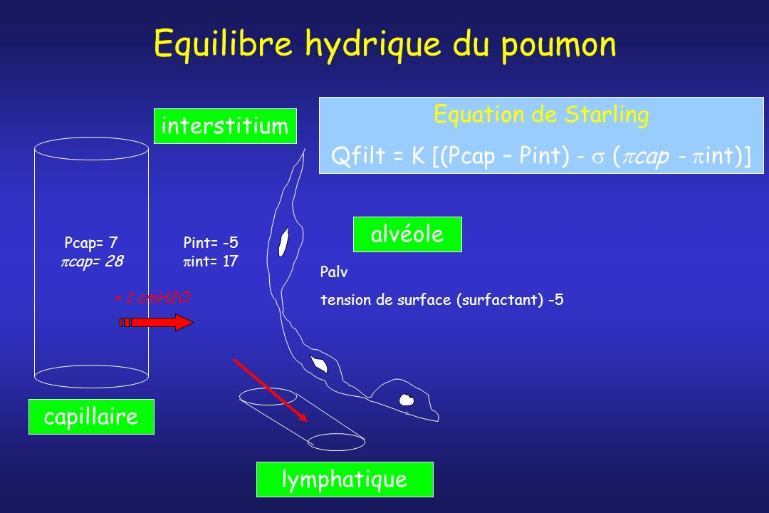 Equilibre hydrique du poumon