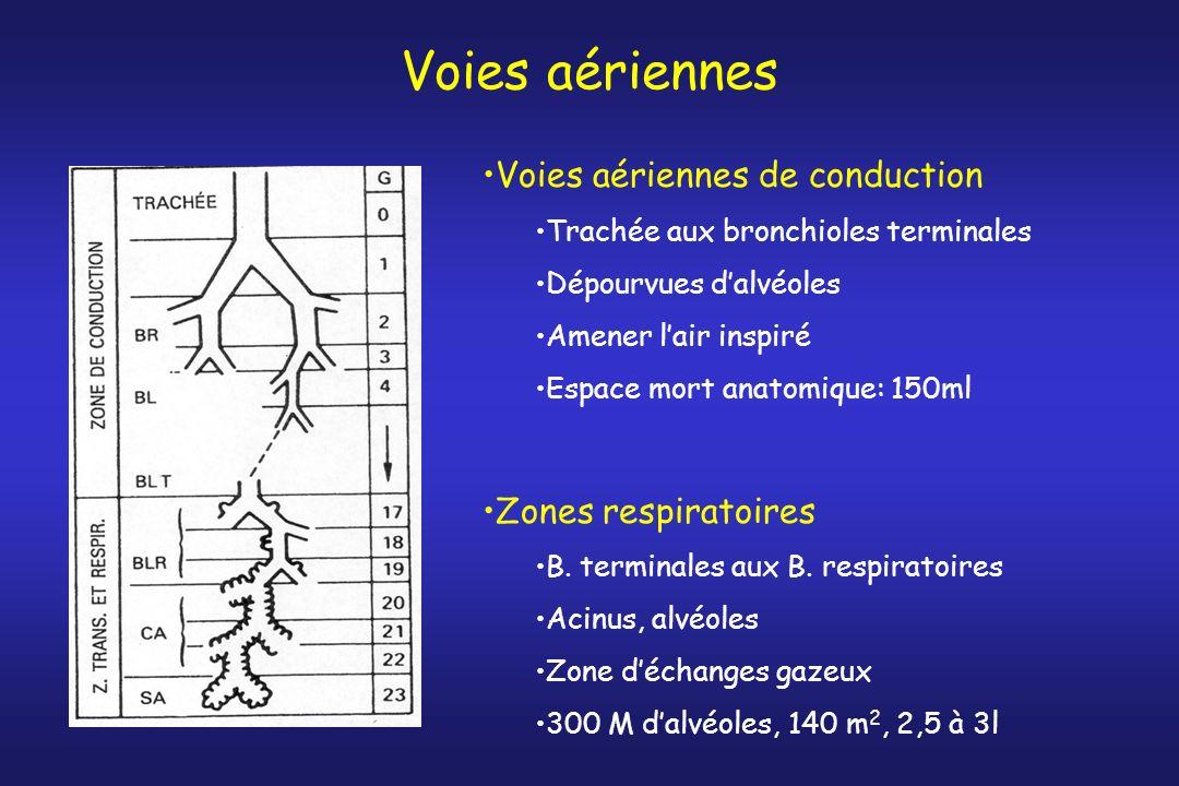 Voies aériennes Voies aériennes de conduction Zones respiratoires