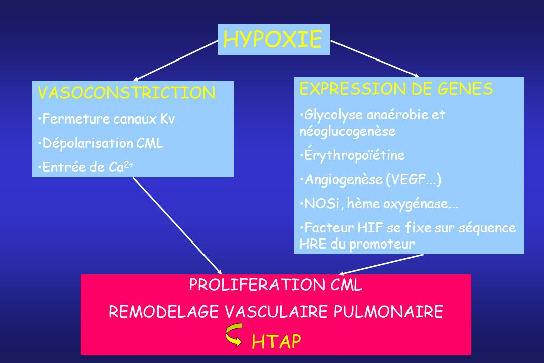 REMODELAGE VASCULAIRE PULMONAIRE