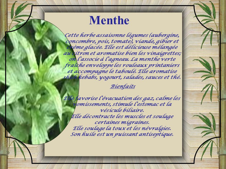 Menthe